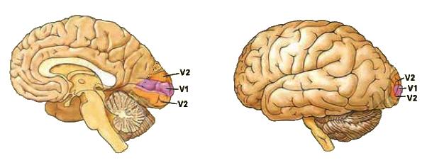 brainV123